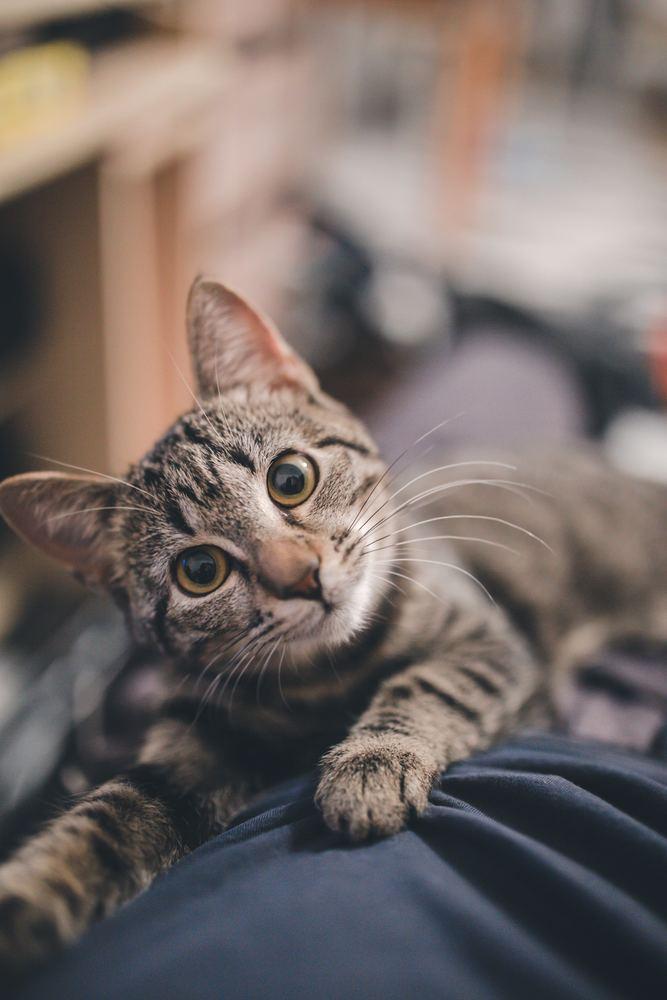 Find billigt kattefoder online